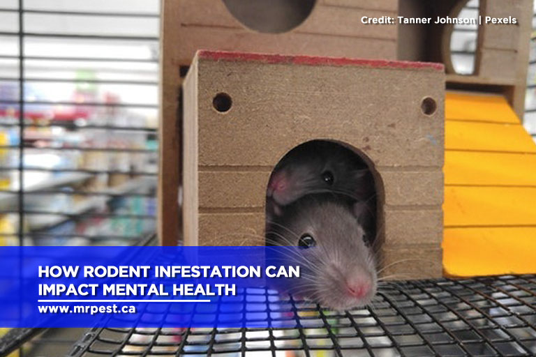 How Rodent Infestation Can Impact Mental Health