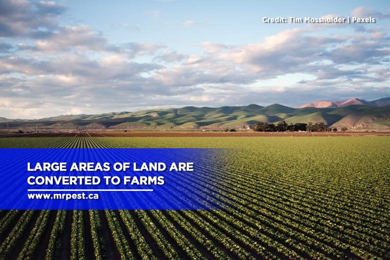 Large areas of land are converted to farms
