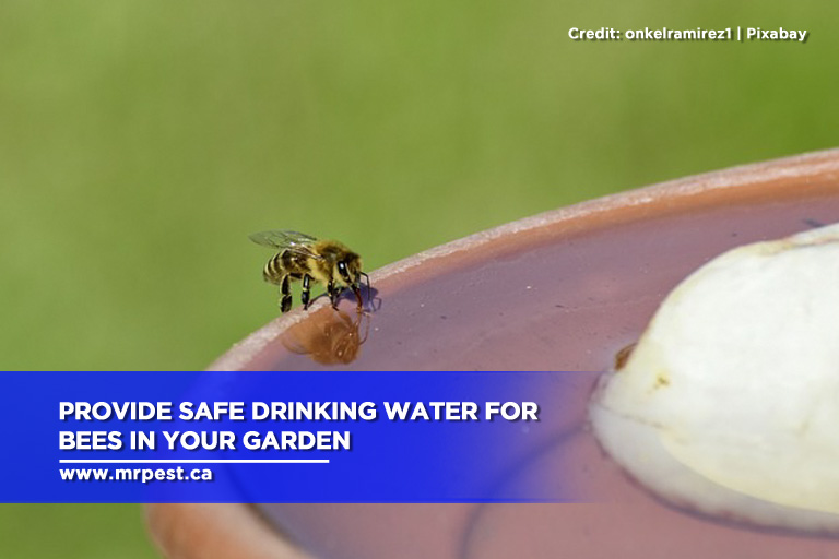 Provide safe drinking water for bees in your garden