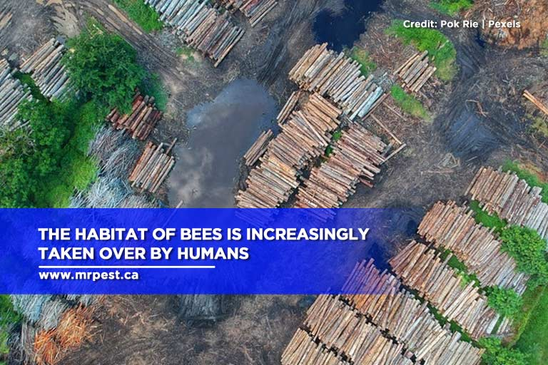 The habitat of bees is increasingly taken over by humans