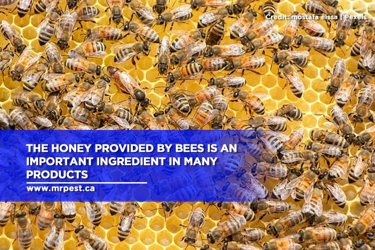 The honey provided by bees is an important ingredient in many products