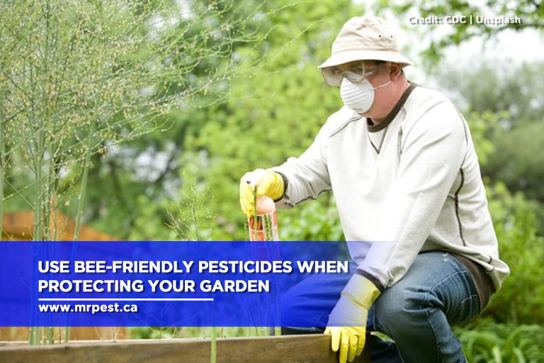 Use bee-friendly pesticides when protecting your garden
