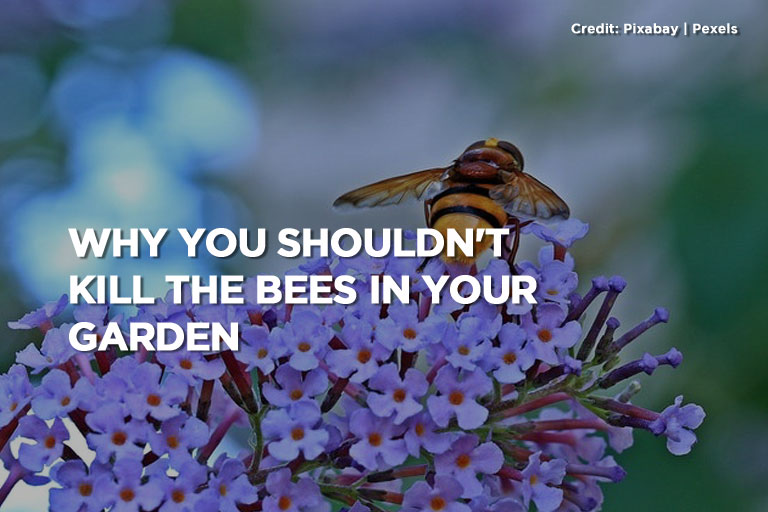 Why You Shouldn't Kill the Bees in Your Garden