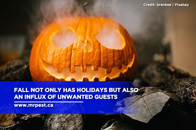 Fall not only has holidays but also an influx of unwanted guests